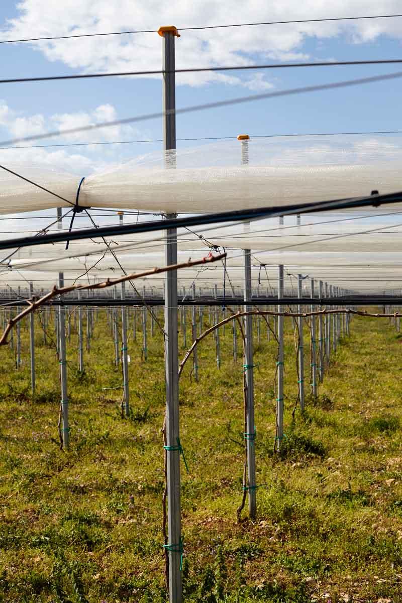 Galvanized Poles
